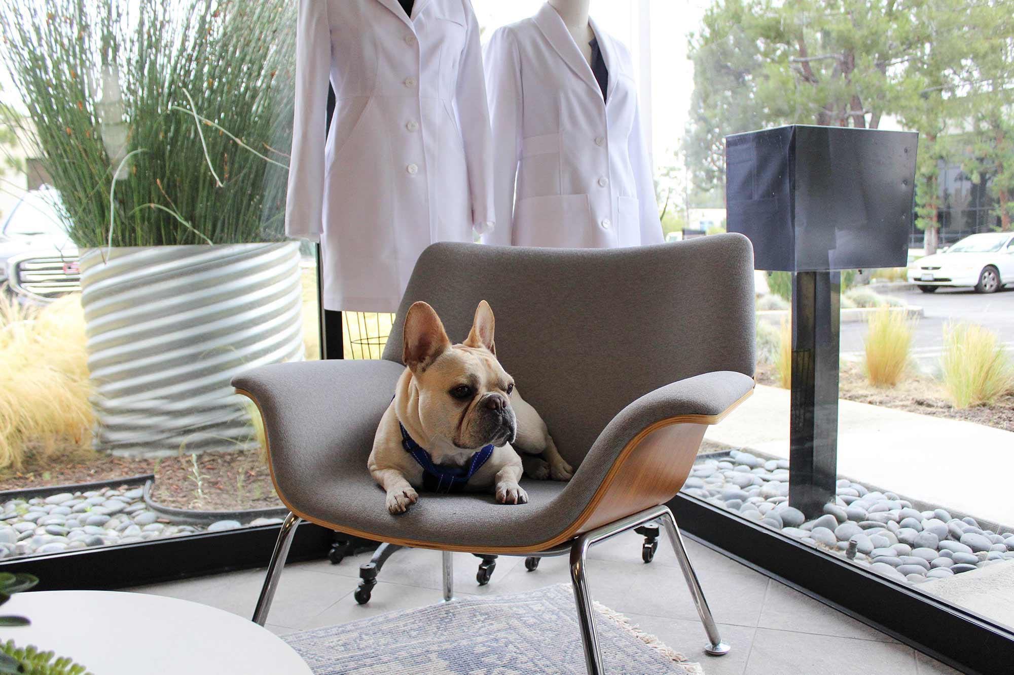 Meet the #DogsOfMedelita