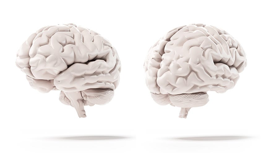 New Study Indicates That Obesity Is Linked To Reduction Of Brain Matter