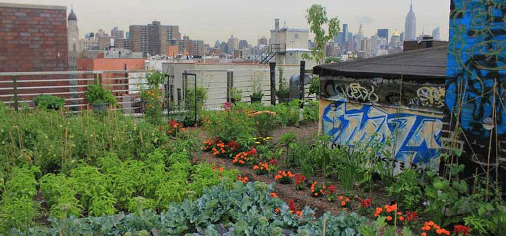 Stony Brook's Hospital Food Program Uses Fresh Ingredients Grown From Its Own Rooftop Garden